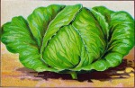 vegiscabbage-graphicsfairy009